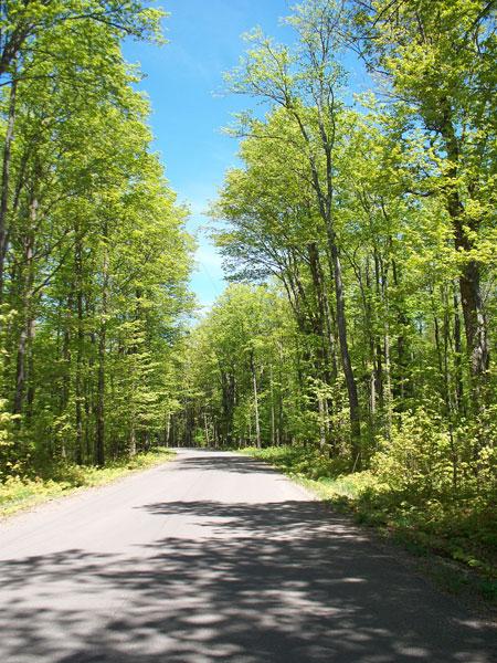 Quiet road leading to the resort